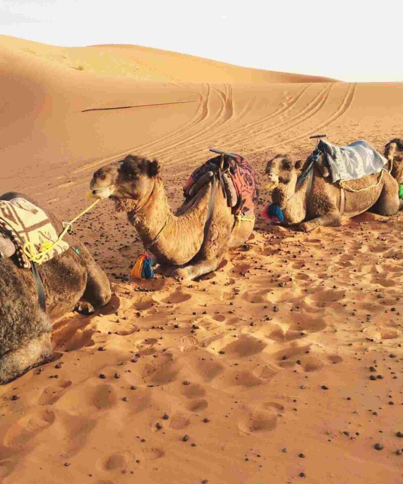 3-day desert tour from Fes