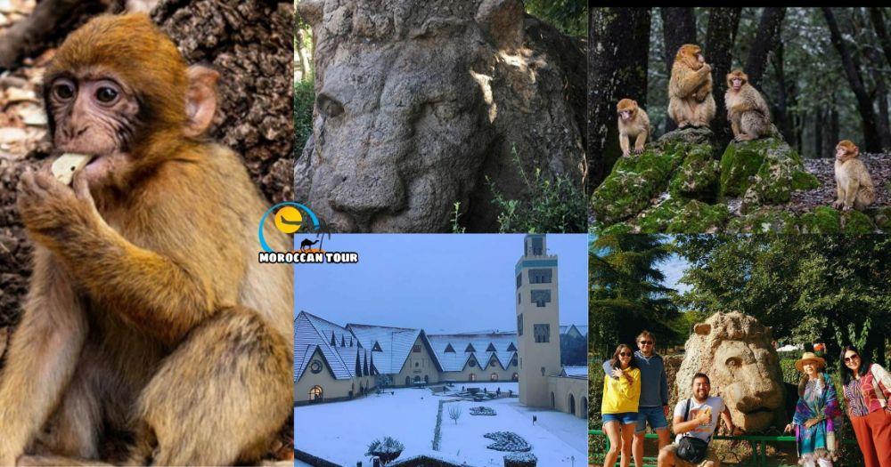 Excursão de um Dia ao Atlas do Meio, à Floresta de cedros, Azrou e Ifran
